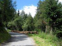 Naturnser Alm: Bild #38