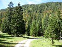 Oberbrunnalm: Bild #38