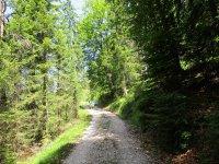 Adlerhorst: Bild #17