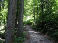 Scharnitz-Almen: Bild #23