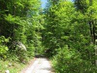 Scharnitz-Almen: Bild #43