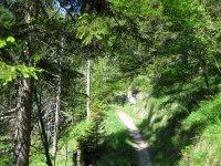 Schwarzenbachtal-Rautalm: Bild #47