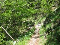 Schwarzenbachtal-Rautalm: Bild #48