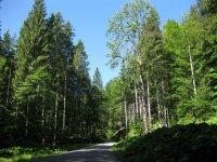 Delpssee: Bild #12