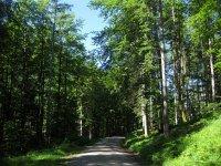 Delpssee: Bild #13