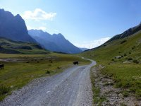 Alp Mora Ofenpass Runde: Bild #20