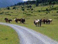Alp Mora Ofenpass Runde: Bild #23