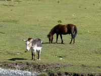 Alp Mora Ofenpass Runde: Bild #25