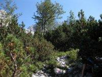 Coburger Hütte: Bild #55