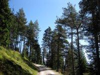 Wangalm und Wettersteinhütte: Bild #21