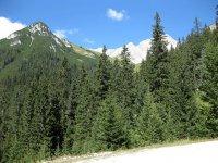 Wangalm und Wettersteinhütte: Bild #22