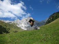 Wangalm und Wettersteinhütte: Bild #35