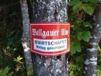 Wallgauer Alm: Bild #5