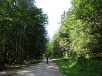 Rund um den Roßkopf: Bild #5