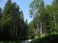 Rund um den Roßkopf: Bild #6