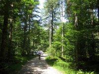 Rund um den Roßkopf: Bild #28