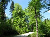 Fockensteinhütte: Bild #3