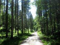 Schronbachtal: Bild #5