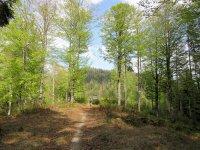 Jachenau-Isartal-Runde: Bild #55