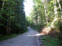 Altlacher Hochkopf Trail: Bild #3