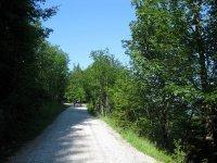 Altlacher Hochkopf Trail: Bild #4