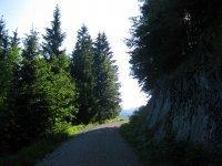 Altlacher Hochkopf Trail: Bild #8