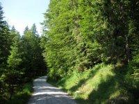Altlacher Hochkopf Trail: Bild #9