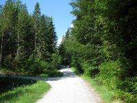 Altlacher Hochkopf Trail: Bild #10