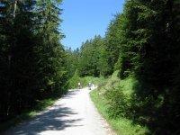 Altlacher Hochkopf Trail: Bild #11