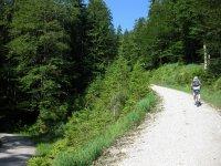 Altlacher Hochkopf Trail: Bild #13