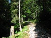 Altlacher Hochkopf Trail: Bild #15