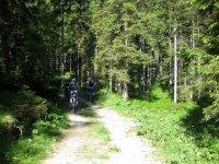 Altlacher Hochkopf Trail: Bild #16