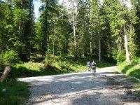 Altlacher Hochkopf Trail: Bild #17