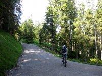 Altlacher Hochkopf Trail: Bild #18