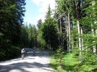 Altlacher Hochkopf Trail: Bild #19