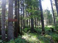 Altlacher Hochkopf Trail: Bild #21