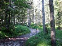 Altlacher Hochkopf Trail: Bild #22