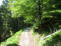 Altlacher Hochkopf Trail: Bild #23
