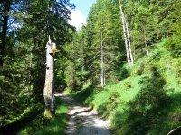 Altlacher Hochkopf Trail: Bild #24