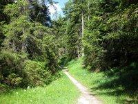 Altlacher Hochkopf Trail: Bild #26