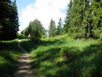 Altlacher Hochkopf Trail: Bild #27