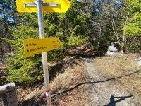 Altlacher Hochkopf Trail: Bild #33