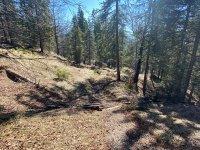 Altlacher Hochkopf Trail: Bild #37
