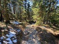 Altlacher Hochkopf Trail: Bild #39