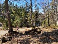 Altlacher Hochkopf Trail: Bild #42