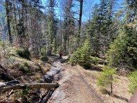 Altlacher Hochkopf Trail: Bild #47