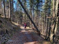 Altlacher Hochkopf Trail: Bild #52