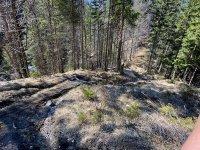 Altlacher Hochkopf Trail: Bild #55