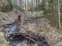 Altlacher Hochkopf Trail: Bild #56
