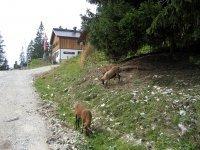 Gufferthütte: Bild #11